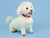 Daisy the Maltese needle felted sculpture