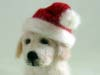 Golden Retriever puppy, felted