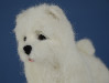 Needle felted Joy the Samoyed handmade by Olga Timofeevski