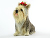 Lulu the Yorkshire Terrier needle felted
