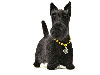 Needle felted figurine of Scottish Terrier