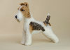 Sara the Wire Fox Terrier needle felted figurine