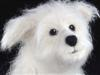 needle felted dog, Westie mix